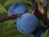DSC02393-Blau