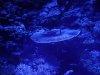 blau-2-PM-Oechsner